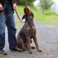 Dog distracted on walks & no control