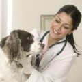 All behaviour cases must be seen on veterinary referral