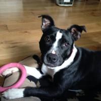 Rescue dog problem prevention telephone consultation