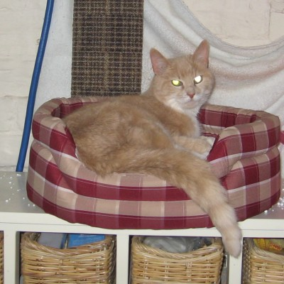 stop cat scratching new carpet
